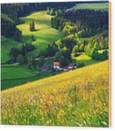 Spring At Black Forest Wood Print