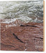 Spring At Sedona In Spring Wood Print