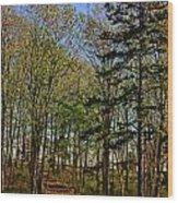 Spring At The Pond Series IIi Wood Print