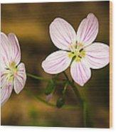 Spring Beauty Wood Print by Thomas Pettengill