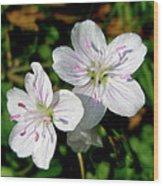 Spring Beauty Wildflowers - Claytonia Virginica Wood Print