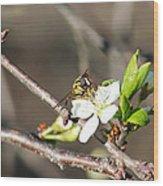 Spring Bee On Apple Tree Blossom Wood Print