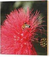 Spring Bee Sweet As Honey Wood Print