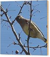 Spring Bird And Berries Wood Print