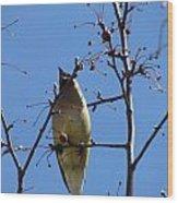 Spring Bird Singing Wood Print