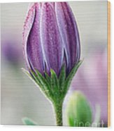 Spring Bloom With Morning Dew Wood Print