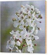 Spring Blooming Bradford Pear Blossoms Wood Print