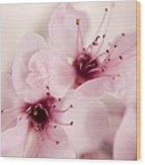 Spring Blooms 0174 Wood Print