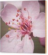 Spring Blooms 6697 Wood Print