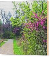 Spring Blooms Along The Path Wood Print