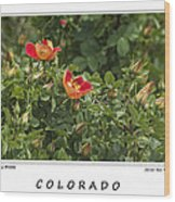 Spring Blooms In Colorado Wood Print