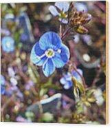 Spring Blooms Of 2013 F Wood Print