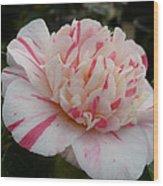 Spring Blooms Of 2013 G Wood Print