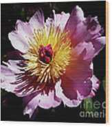 Spring Blossom 12 Wood Print