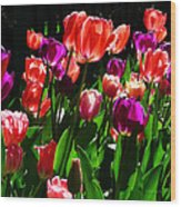 Spring Blossom 5 Wood Print