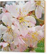 Spring Blossom Wood Print