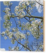 Spring Blossoms 2014 Wood Print