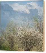 Spring Blossoms Storm Approaching Wood Print