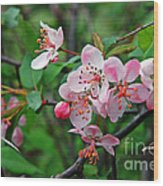 Spring Blossoms West Virginia Wood Print