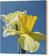 Spring Blue Sky Yellow Daffodil Flowers Art Prints Wood Print by Baslee Troutman