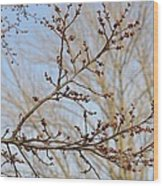 Spring Bound Wood Print