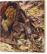 Spring Bounty Morel Mushroom Wood Print
