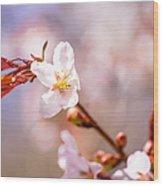 Spring Breeze Wood Print