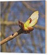 Spring Bud Wood Print