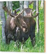 Spring Bull Moose Wood Print