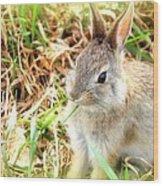 Spring Bunny Wood Print