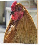 Spring Chicken Wood Print
