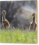 Spring Chicks In The Sunshine Wood Print