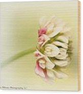 Spring Clover Blossom Wood Print