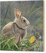 Spring Cottontail Wood Print