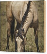 Spring Creek Basin Wild Horse Grazing Wood Print