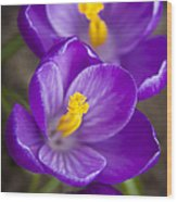 Spring Crocus Wood Print