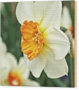 Spring Daffodil Wood Print by Cathie Tyler