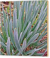 Spring Daffodil Plant Wood Print