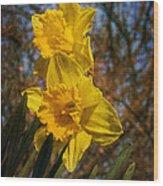 Spring Daffodils  Wood Print by Brian Roscorla