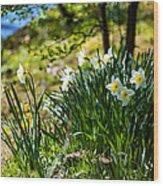 Spring Daffodils.park Keukenhof Wood Print