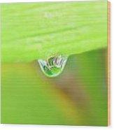 Spring Dewdrop Wood Print