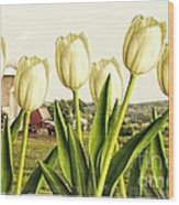 Spring Down On The Farm Wood Print