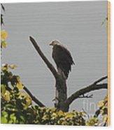 Spring Eagle I Wood Print