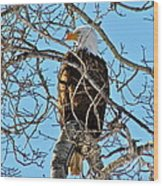 Spring Eagle Wood Print