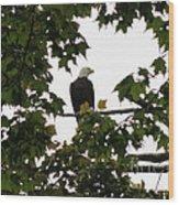 Spring Eagle Vi Wood Print