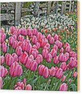 Spring Fence Landscape Art Prints Wood Print