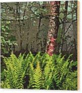 Spring Ferns Of The Blue Ridge 3 Ap Wood Print