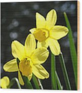 Spring Floral Art Prints Glowing Daffodils Flowers Wood Print