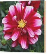 Spring Flower 1 Wood Print