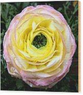 Spring Flower 3 Wood Print